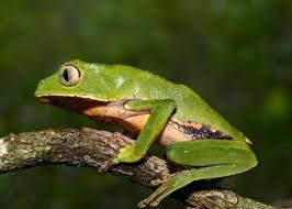 Iniciativas para reactivar el turismo de naturaleza serán financiadas y galardonadas con el premio Colombia riqueza natural