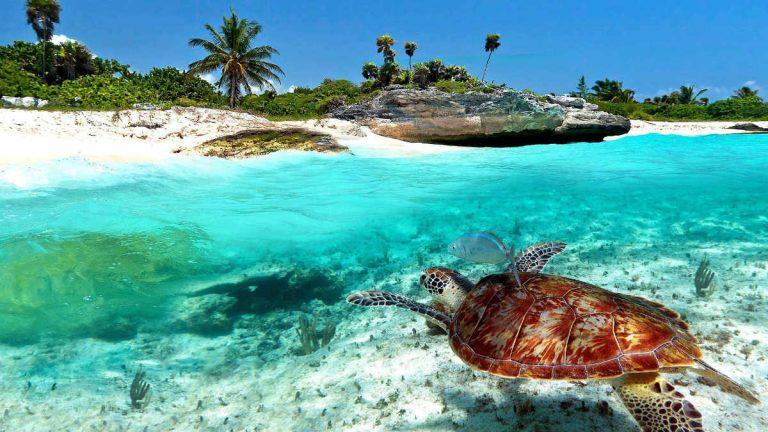 Caribe Mexicano ejemplo de reactivación turística